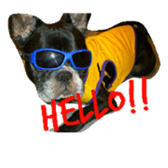 French Bulldog syu&coo