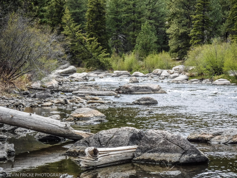 Back to eleven mile for Eleven mile canyon fishing report