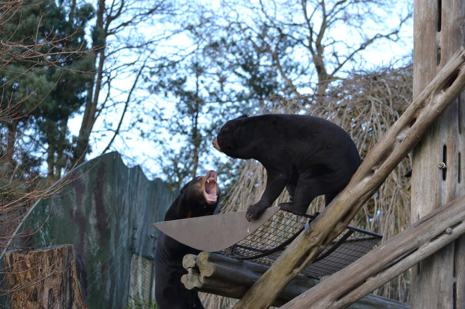 Throwback to Edinburgh Zoo!