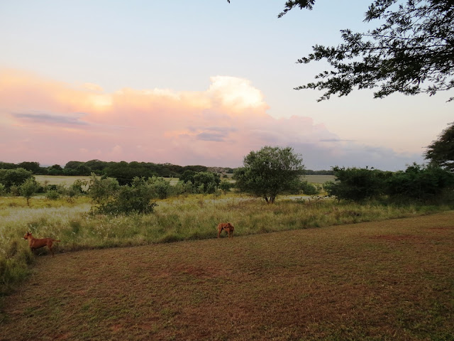 The Hluhluwe iMfolozi Game Park was established in 1895, and along with the St Lucia Reserve, is the oldest formally proclaimed conservation area in Africa. Conservation in the area had been practiced prior to the formal proclamation of the area, as the iMfolozi section was previously the exclusive hunting preserve of the Zulu kings, and consequently well protected. The game pits in which the animals were trapped can still be seen today in the south of the park.