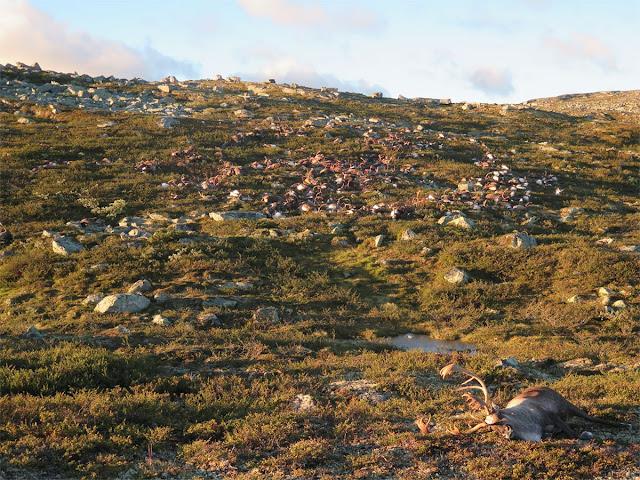 Lightning Storm Kills More Than 300 Deer in Norway