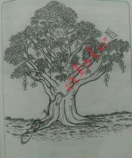 Contoh gambar pohon dan kunci jawaban + pembahasan soal psikotes