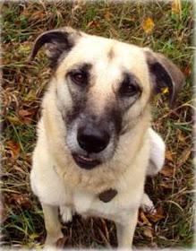 Ottawa Valley Dog Whisperer Natural Treatment For