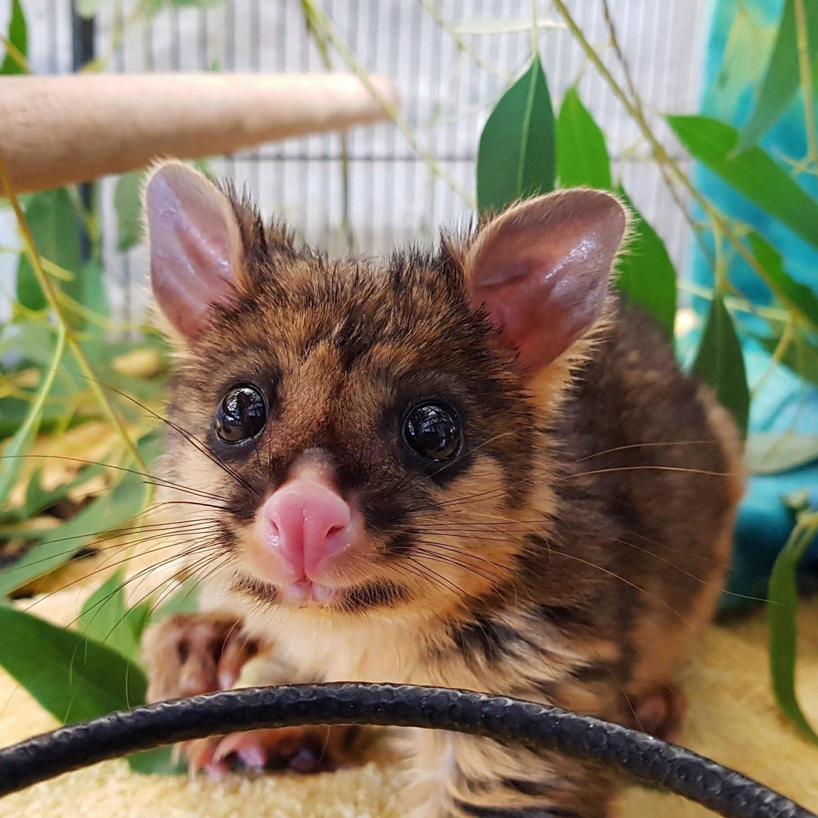 Zoo News Digest: Zoo News Digest 16th April 2018 (ZooNews 989)