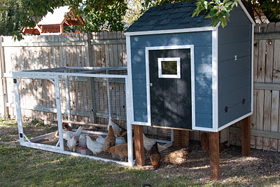 finished coop with chickens