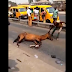 [VIDEO] Lol! Tired horse collapses after doing the job of a keke napep for one day
