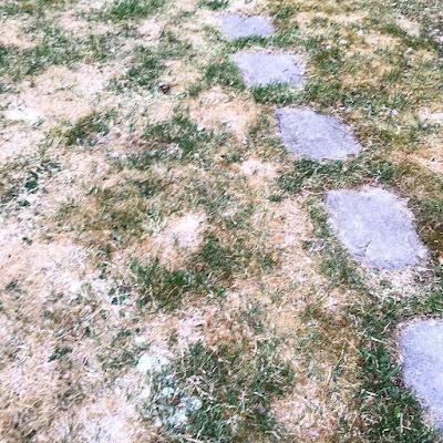 sammasyöpön ja kalkin laikuttama nurmikko ja kivetty polku