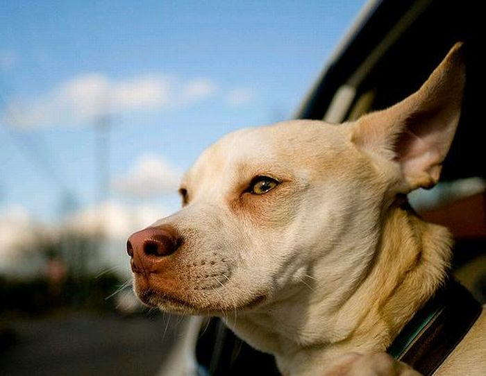 Funny Dog Faces At 50 Mph Damn Cool Pictures