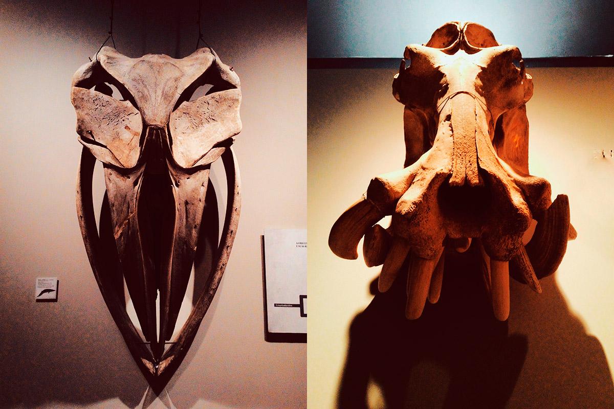 Museu de Zoologia da Usp | Onde as Estrelas são Selvagens