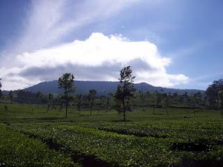 http://vilaistanabungavilage.blogspot.com/2015/06/wisata-alam-cic-dekat-villa-istana-bunga.html