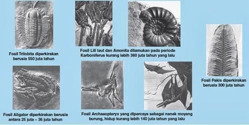 Bukti Pendukung Teori Evolusi