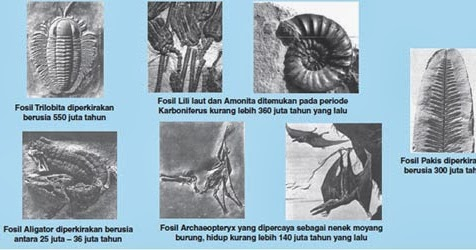 01/08/2012· teori evolusi kimia telah teruji melalui eksperimen di laboratoriurn, sedang teori evolusi biologi belum ada yang menguji secara eksperimental. Penjelasan Bukti Pendukung Teori Evolusi   Materi SMA Online