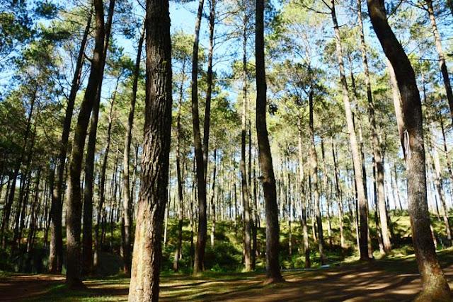 Paket Outbound di Bandung di Area Dengan Konsep Hutan