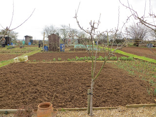 dug earth, growing garlic, prepared beds!