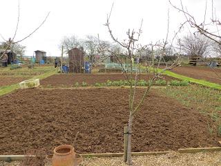 dug earth, growing garlic, prepared beds!
