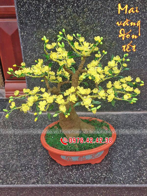 Goc bonsai mai dao cay hoa mai tai Tran Cao Van