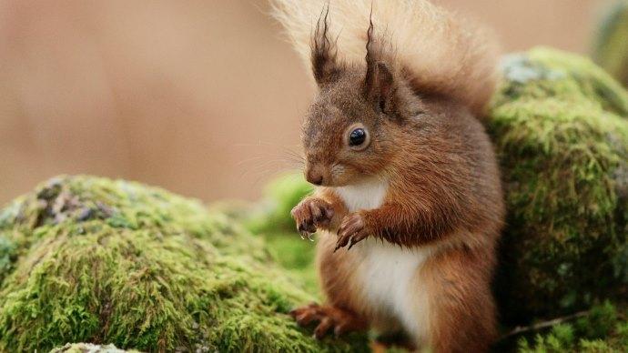 Wallpaper 2: Cute Squirrel