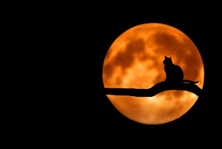 A orange moon with the silhouette of a cat in front of it.