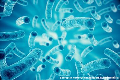 Бактерии помогут предсказать курс биткойна