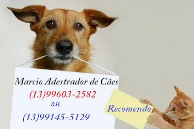 Marcio Adestrador de Cães (13)99603-2582 e (13)99145-5129