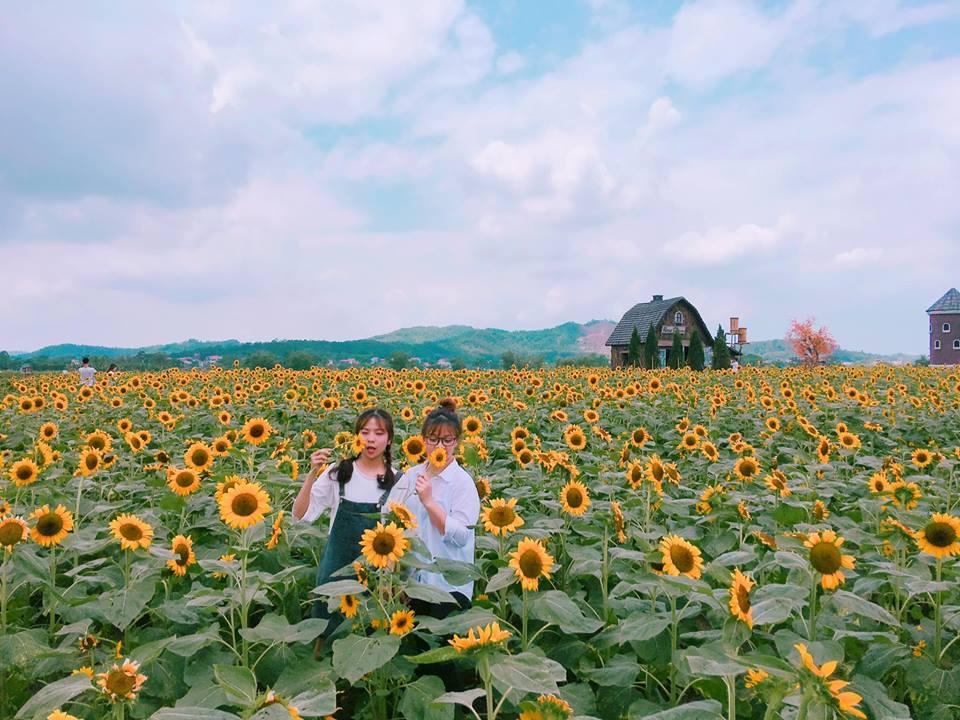 Giới trẻ 'phát sốt'' với vườn hoa hướng dương tại Bắc Giang -4
