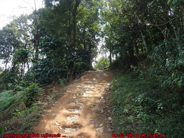 Meenmutty Waterfalls Trekking
