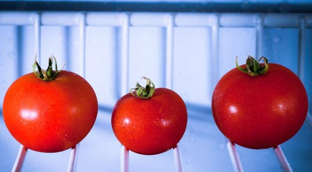 Ini Akibat yang Akan Ditimbulkan Jika Para Orang Tua Masih Suka Menyimpan Tomat Didalam Lemari Es
