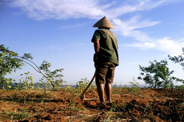 Petani Miskin Indonesia Angka Kemiskinan Cukup Tinggi Menurut Badan Pusat
