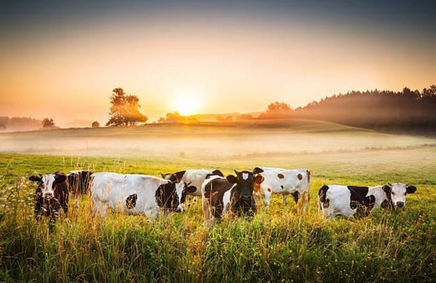 gado-galeria-animal