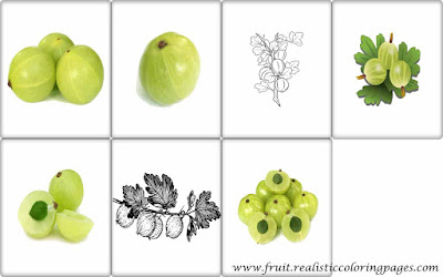 7 gooseberry fruit royalty free clipart