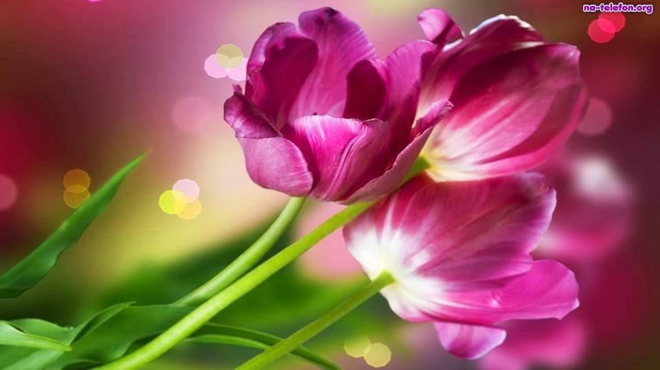 Pozytywna Strona życia Znajdź Swoje źródło Radości