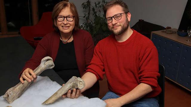 Restos de un animal prehistórico revelan datos sobre la aparición humana en Madagascar