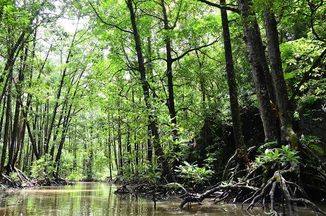 manglar, medio ambiente, ecologia