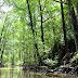 Conservación del ecosistema Manglar