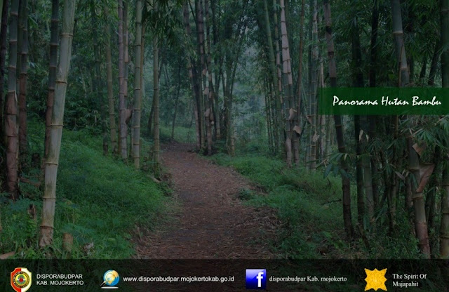 wisata hutan bambu mojokerto jawa timur
