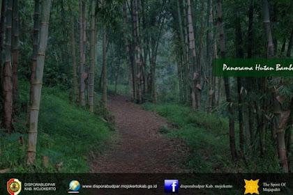 Wisata di Hutan Bambu Mojokerto dan Air Terjun Surodadu yang Menakjubkan
