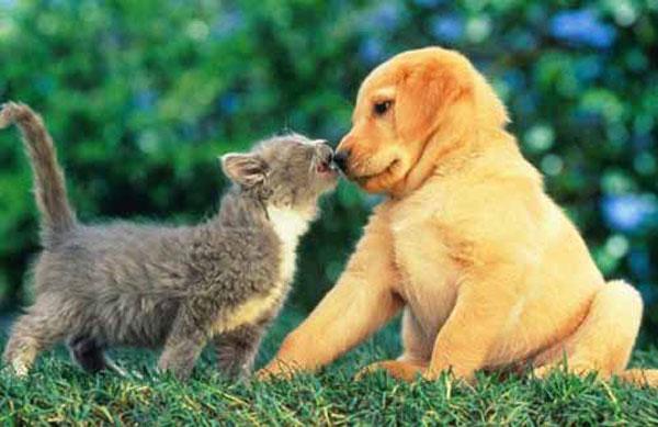Yang Ini Anjing Dan Kucing Lagi Maen Kay Si Kucing Lagi Berusaha Mencium Sang Anjing Sedangkan Sang Anjing Berusaha Menghindar Dari Sang Kucing Lucu