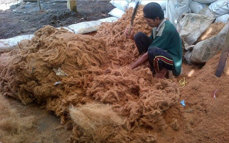 Manfaat Sabut Kelapa dan Cocopeat Sebagai Media Tanam Untuk Budiaya Tanaman