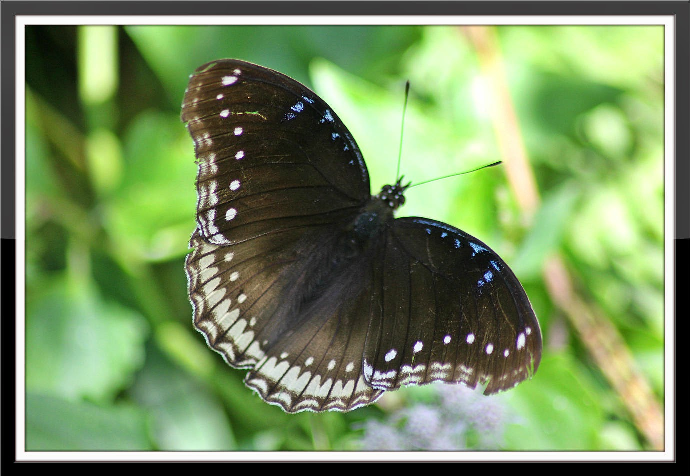 Butterfly - photo#46