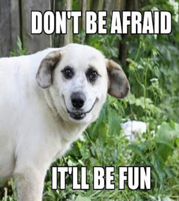 ''Funny Dog Humour'' : Don't be afraid