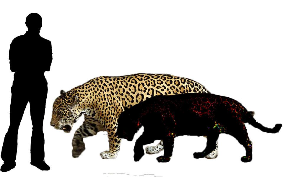 leopard and jaguar comparison - photo #16