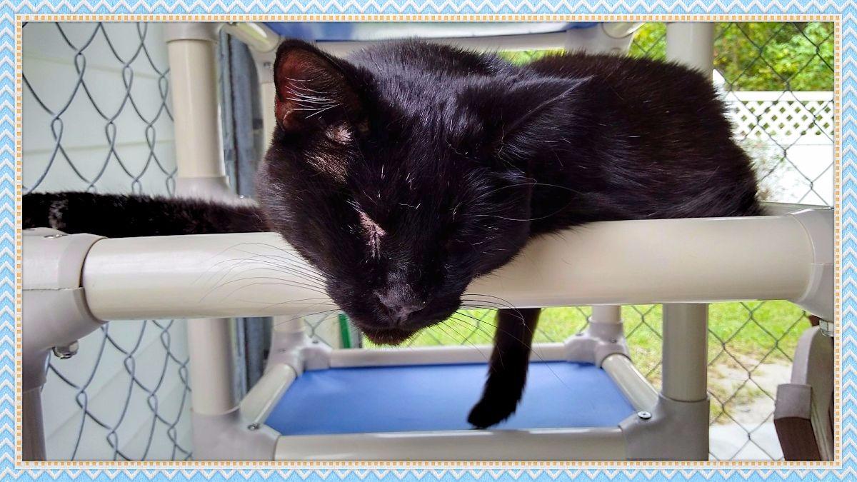 Blind Cat Rescue Texas