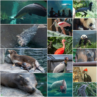 Smithsonian's National Zoo - WDC