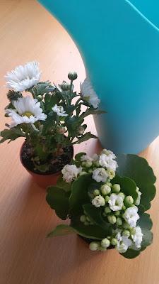 arrossage-bleu-2-petites-plantes-vertes