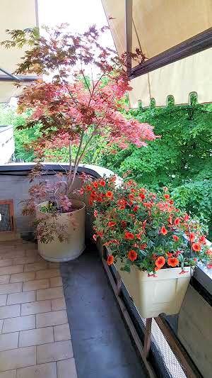 Creare per Hobby: Terrazzi e balconi fioriti