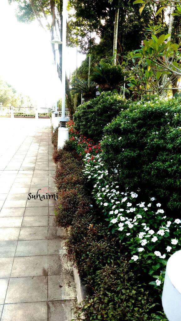 Bunga Di Putrajaya