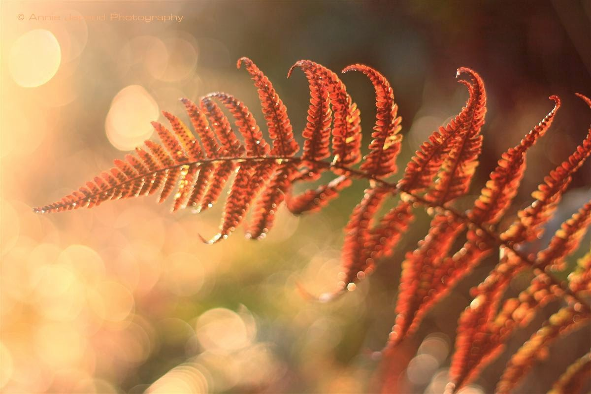 ferns in the beautiful light