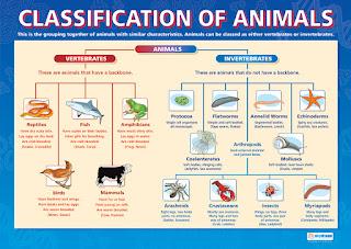 http://science.freddyflash.com/vertebrates.html