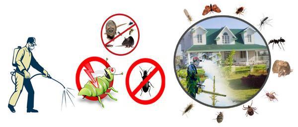 أرخص شركة مكافحة حشرات بالدمام ورش المدبيدات