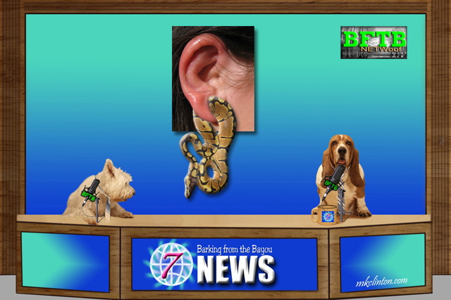 BFTB NETWoof News reports on python getting stuck in woman's ear gauge